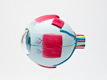 Globo del ojo humano Fotos de archivo libres de regalías