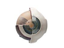 Globo del ojo humano Foto de archivo libre de regalías