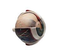 Globo del ojo humano Imagenes de archivo