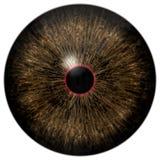 Globo del ojo marrón de los perros con el fondo blanco aislado imagenes de archivo
