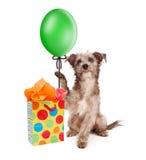 Globo del partido de la tenencia del perro con el regalo Imágenes de archivo libres de regalías