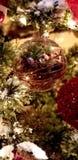Globo dell'albero fotografie stock libere da diritti