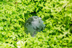 Globo di vetro in erba verde Immagine Stock Libera da Diritti