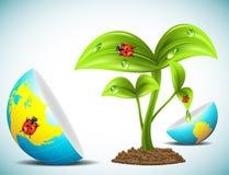 Globo e pianta Fotografia Stock