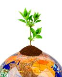Globo e planta Fotografia de Stock Royalty Free