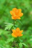 Globo-flor Fotografía de archivo libre de regalías