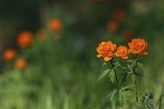 Globo-flor Imágenes de archivo libres de regalías