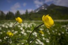 Globo-flor Imagem de Stock Royalty Free