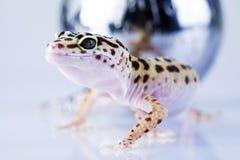 Globo in gecko Immagini Stock