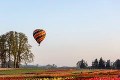 Globo multicolor del aire caliente que flota en una baja altitud sobre campo del tulipán fotos de archivo