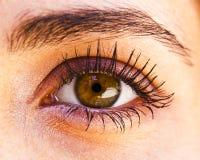 Globo ocular Imagem de Stock Royalty Free