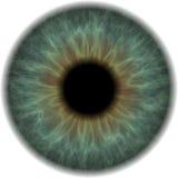 Globo ocular ilustração stock