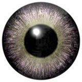 Globo ocular cinzento interessante com luz - verde ilustração do vetor