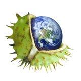 Globo protegido en la cáscara de una castaña, símbolo de environmen Imágenes de archivo libres de regalías