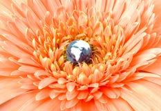 Globo que floresce na flor Fotografia de Stock