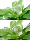 Globo verde Fotografia de Stock