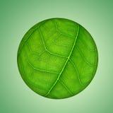 Globo verde del foglio Fotografia Stock
