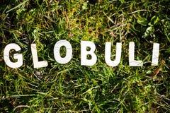 Globoles在草甸 免版税库存图片