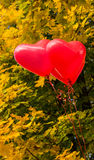 Globos del corazón del amor, al aire libre Imagenes de archivo