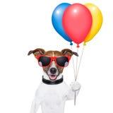 Globos del perro y caramelo de algodón Foto de archivo libre de regalías