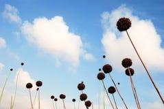 Globos florales Fotografía de archivo