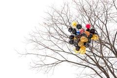 Globos pegados en el árbol Fotos de archivo