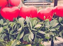 Globos rojos del corazón con la planta de la enredadera Imagenes de archivo