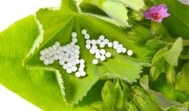 Globula na leczniczych ziele Zdjęcie Stock