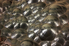 Globular Hematite Stock Photography