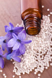Globule with hyacinth flower. Natural homeopathic globule with hyacinth flower Stock Photo