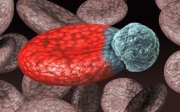 Globule sanguin avec le virus Photographie stock libre de droits