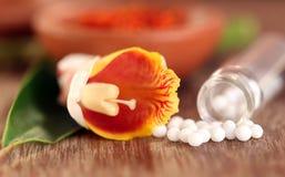 Globules ομοιοπαθητικής με το βοτανικό λουλούδι Στοκ Φωτογραφία