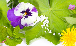 Globules and healing herbs Royalty Free Stock Photo