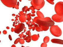 Globules rouges Photo stock