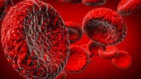Globulo rosso Immagine Stock