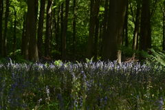 Glockenblume-Holz Lizenzfreies Stockbild