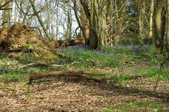 Glockenblume und Bäume Stockfotografie