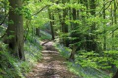 Glockenblume-Waldland lizenzfreie stockfotografie