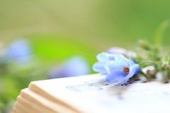 Glockenblumen auf einem Musikbuch Stockbilder