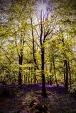Glockenblumen Sun-Bäume Stockfotos