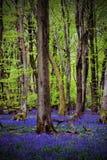 Glockenblumen unter hohen Bäumen Lizenzfreies Stockfoto