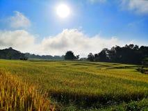 Gloden米领域早晨 免版税图库摄影