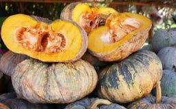 Gloden Pumpkin. The biggest gloden pumpkin in thailand Royalty Free Stock Photography