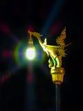 Gloden swan light. The beauty of swan golden light Royalty Free Stock Photos