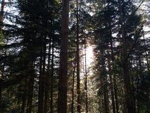 Gloed en Zonlicht van ochtendzon het filtreren door de bomen en de mist stock afbeelding