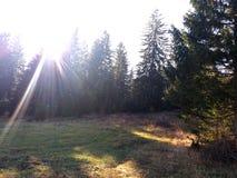 Gloed en Zonlicht van ochtendzon het filtreren door de bomen en de mist stock fotografie