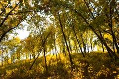 Gloeiend bos Stock Foto's