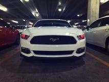 Gloeiend Mustang Stock Foto