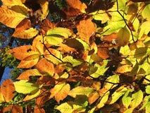 Gloeiende Bladeren Royalty-vrije Stock Afbeeldingen