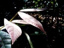 Gloeiende Bladeren stock afbeeldingen